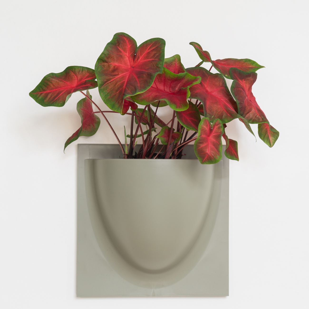 Bring natura Inside with VertiPlants
